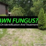 Tips On Identification And Treatment Of Lawn Fungus