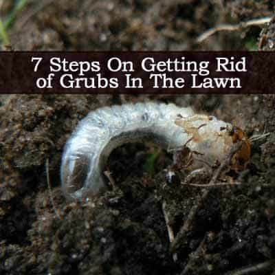 A Natural Way To Get Rid Of Grub Worms