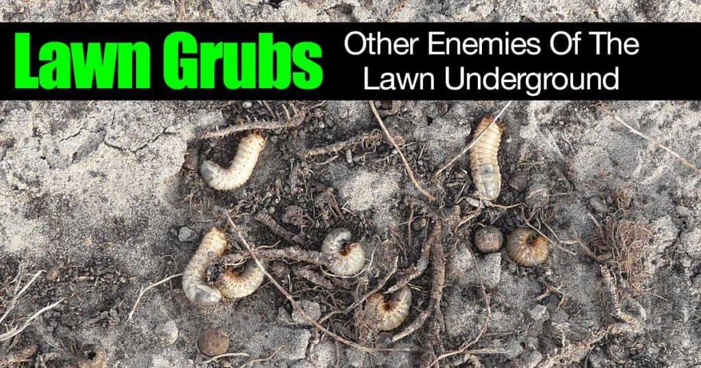 lawn grubs underground