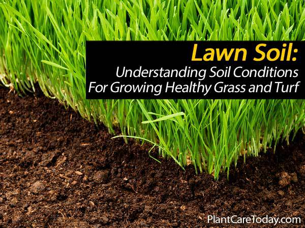 Lawn Soil Understanding Soil Conditions For Growing