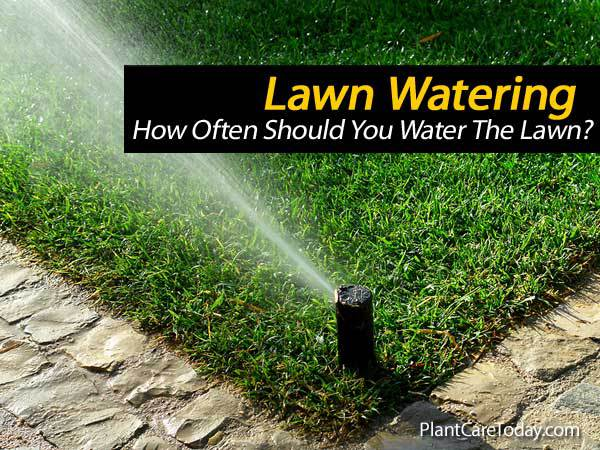 How Often Should A Lawn Be Watered?