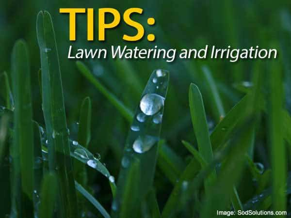 lawn-watering-irrigation-033114