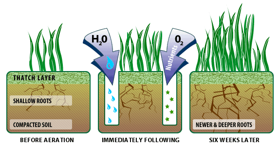How Does Aeration Help Repair A Compacted Lawn?