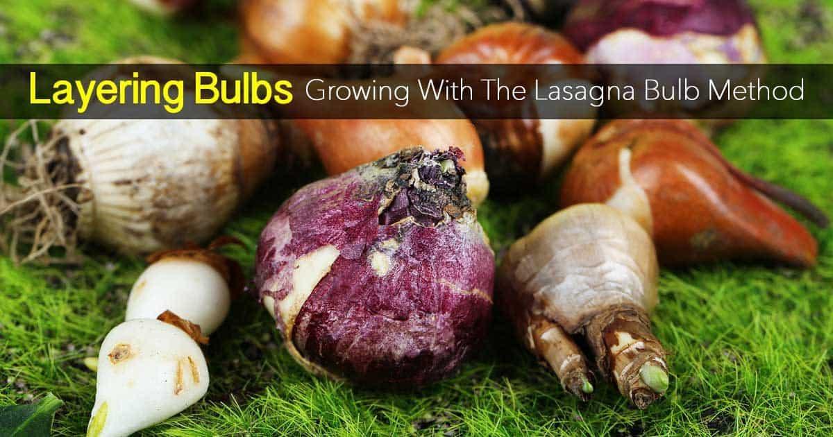 layering-bulbs-09302016