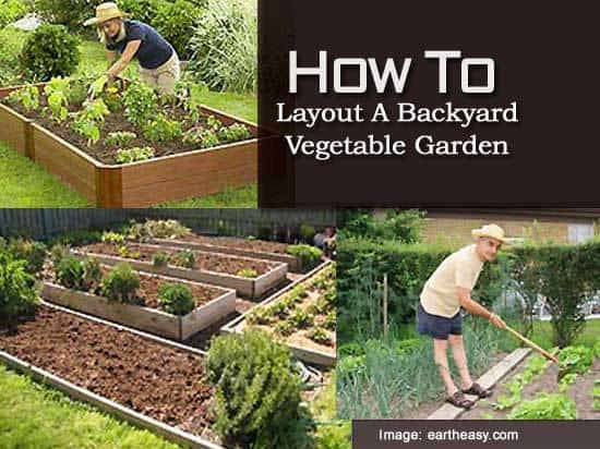 Pictures Of Backyard Vegetable Gardens : How To Layout A Backyard Vegetable Garden