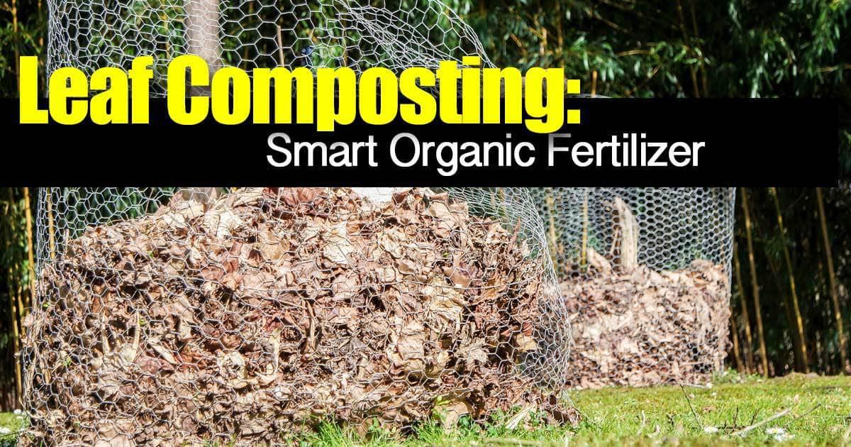leaf-composting-06302015