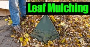 leaves used for mulching