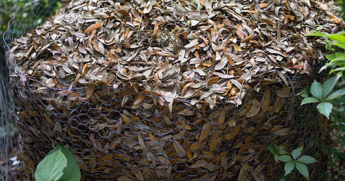 leaves-mulch-chicken-wire-09302016