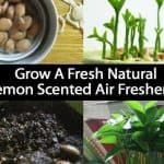 Grow A Fresh Natural Lemon Scented Air Freshener