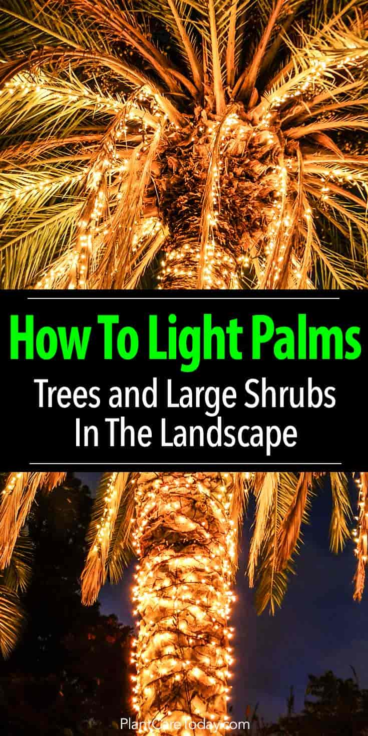 Lighting Palm Trees Illuminate Palms And Shrubs How To