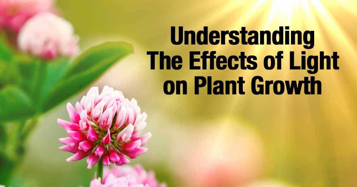 light-plant-growth-12312015