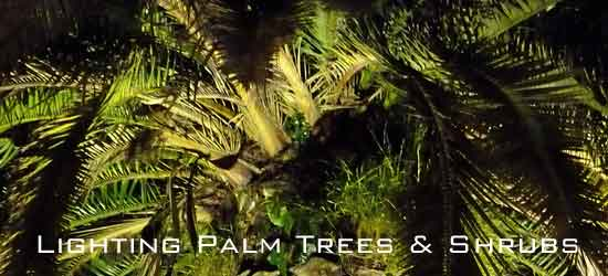 lighting-palms-550