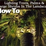 How To Light Trees, Palms and Large Shrubs In The Landscape