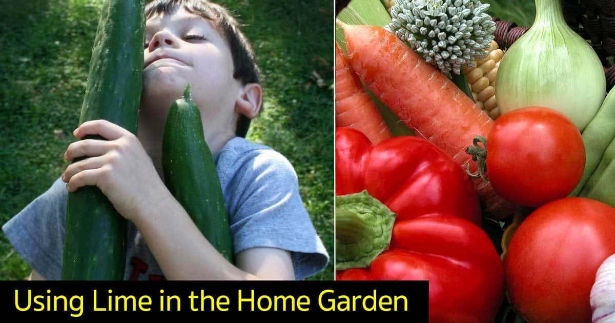 lime-garden-11302015
