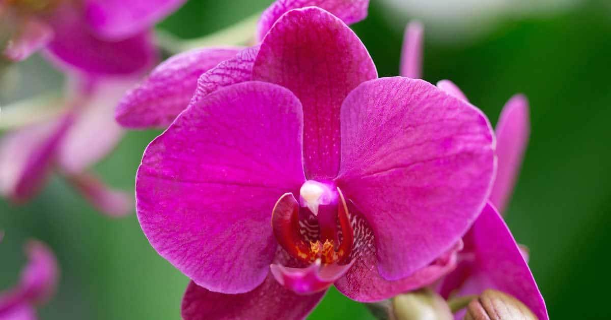 Flowering House Plants flowering house plants - tips for longer lasting flowers, tropical