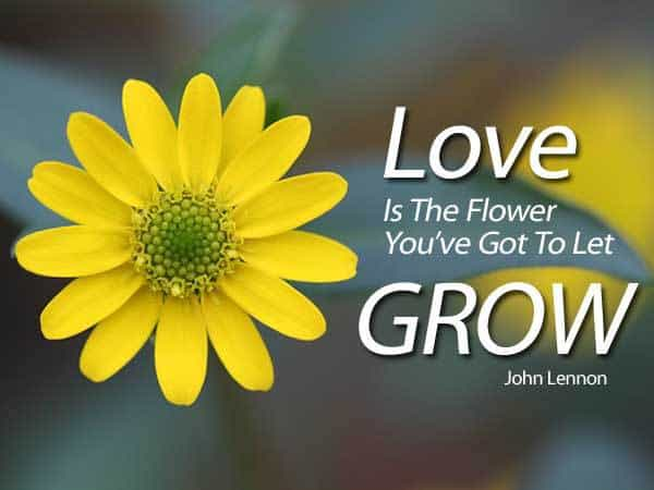 Quote - Love Is The Flower...