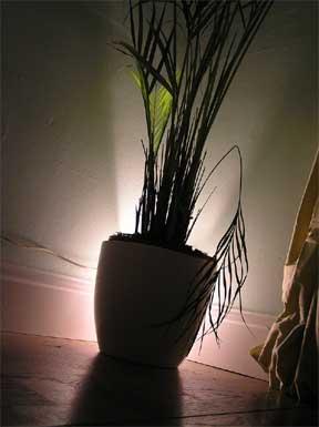 ¿Cómo afecta la luz o la falta de ella a las plantas?