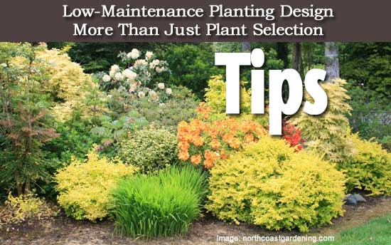 Tips on low maintenance planting design more than just for Low maintenance border shrubs