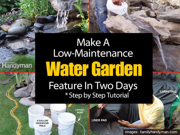 Low Maint Water Garden 053114