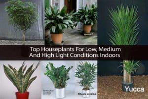 Low, Medium and High Light Houseplants