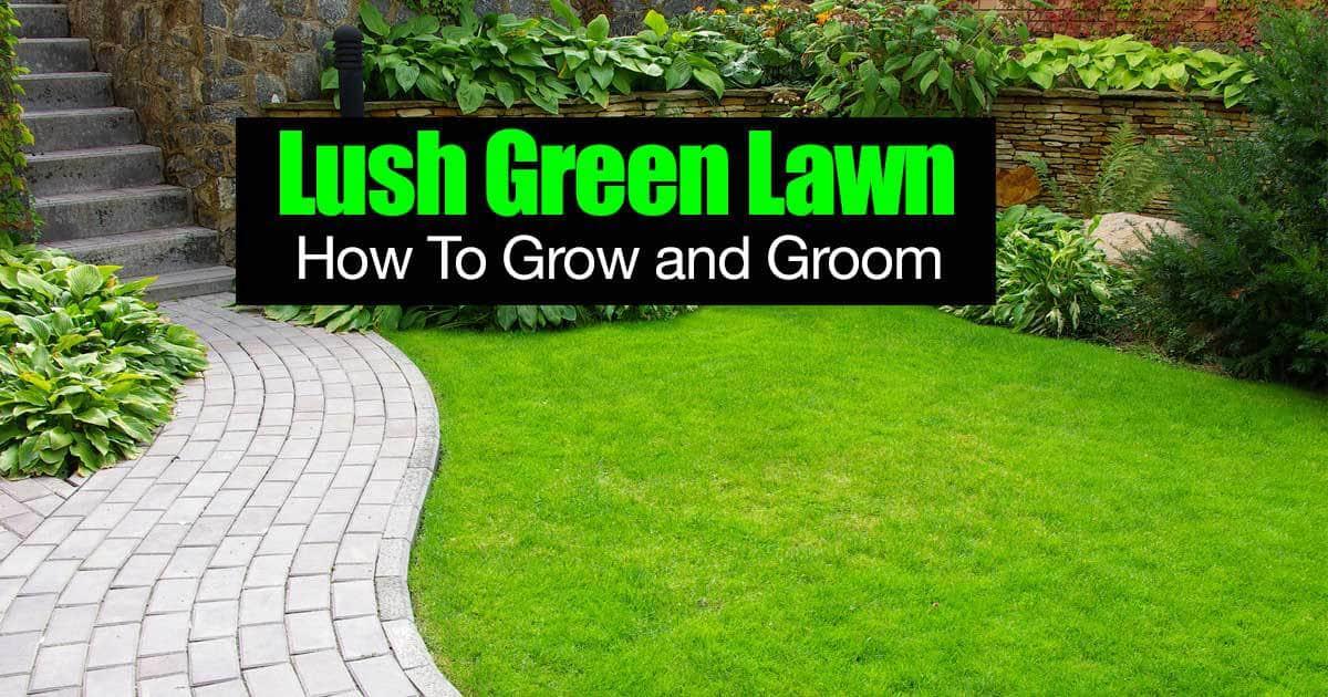 lush-green-lawn-01312016