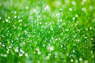lush-lawn