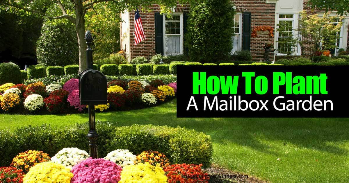 How to plant a mailbox garden video for How to plant a garden
