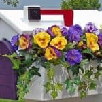 Mailbox Garden Ideas: How To Create Curb Appeal With A Mailbox