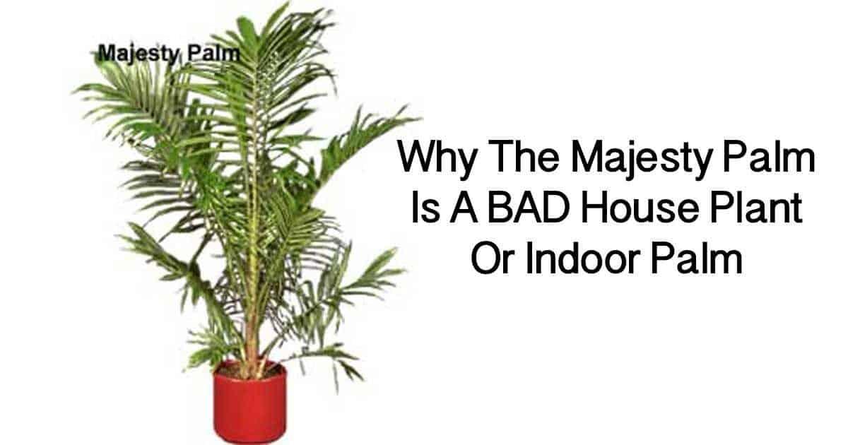 majesty-palm-bad-09302016-1200x630 Majesty Palm House Plant on majesty palm soil, majesty palm plant, majesty palm hedge, majesty palm fertilizer, majesty palm tree, majesty palm leaves, majesty palm flower, majesty palm family, majesty palm indoor,