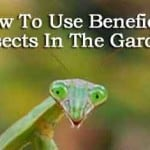 How To Use Beneficial Insects In The Garden