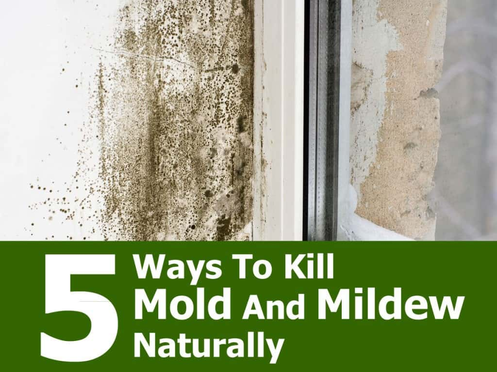 What Is The Best Way To Clean Windows Naturally