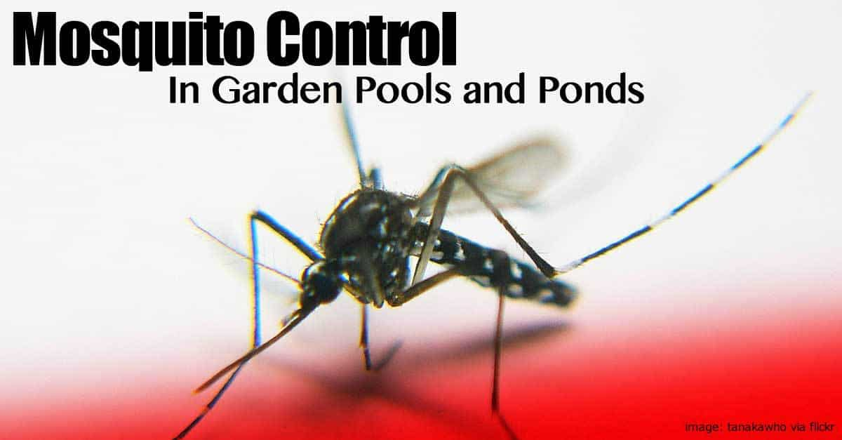 Mosquito Control In Garden Pools And Ponds