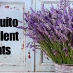 31 Mosquito Repellant Plants