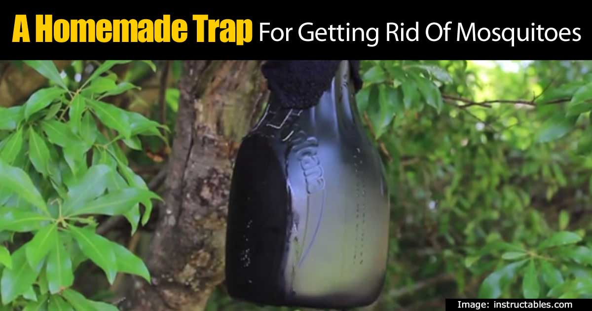 Military designed homemade trap for getting rid of Ways to get rid of mosquitoes in your house