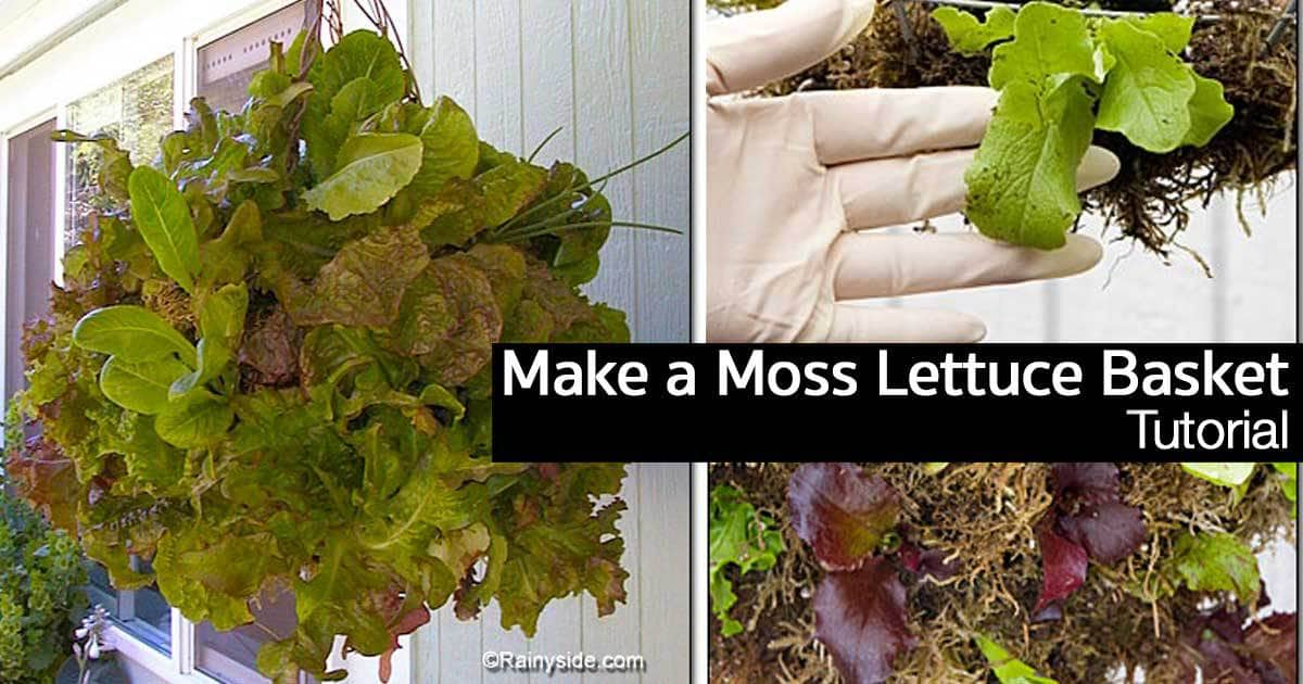 moss-lettuce-basket-11302015