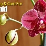How To Buy and Care For An Orchid