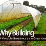 Why Building A Movable Greenhouse Is A Great Idea