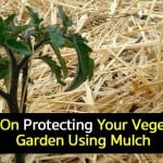 Vegetable Garden Mulch: How To Use Mulch In The Garden