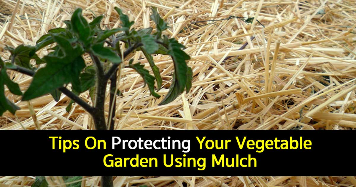 Vegetable Garden Mulch