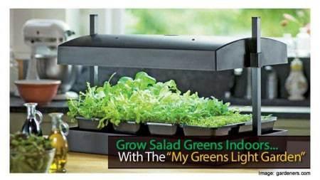 my-greens-lights-120313