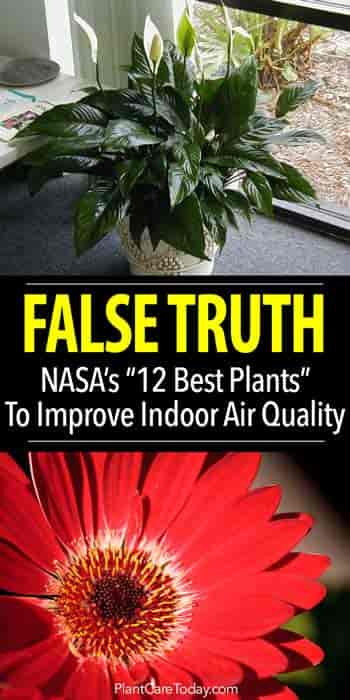 Lately Lots Of Articles Extolling The Virtues 10 Best Air Cleaning Plants According To Nasa Have Been Published Online