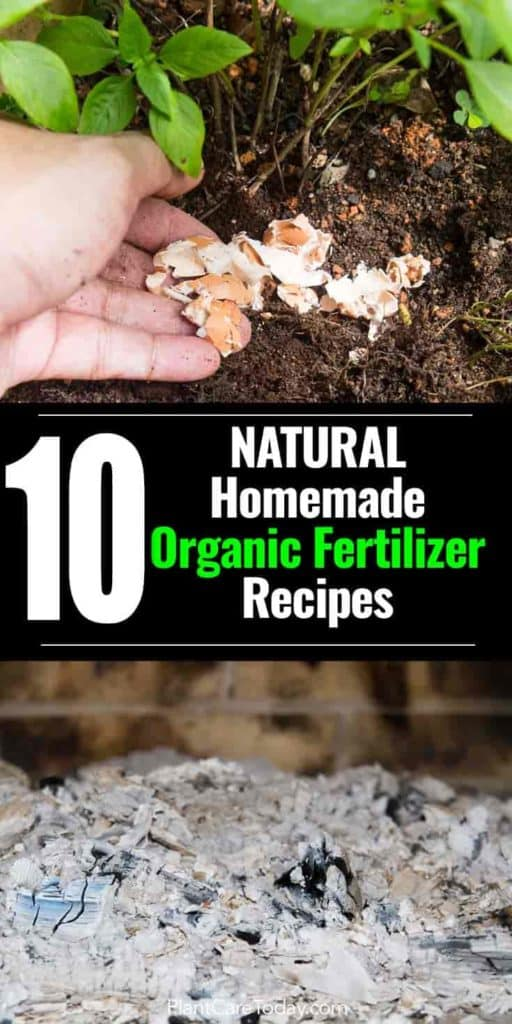 natural organic fertilizer options - egg shells and wood ash used as natural fertilizers