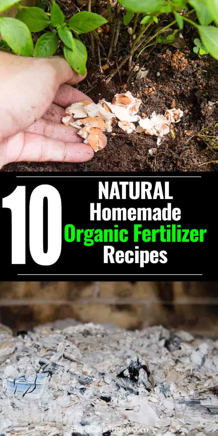 10 Natural Homemade Organic Fertilizer