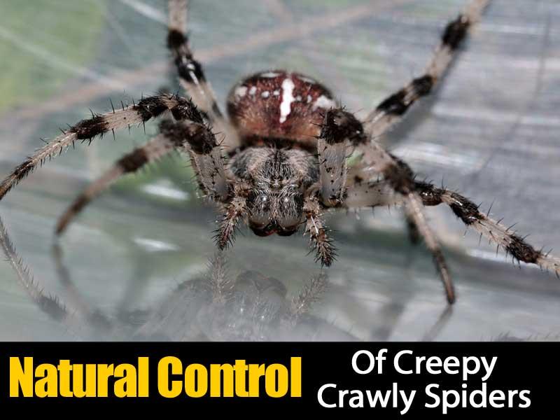 natural-spider-control-083114