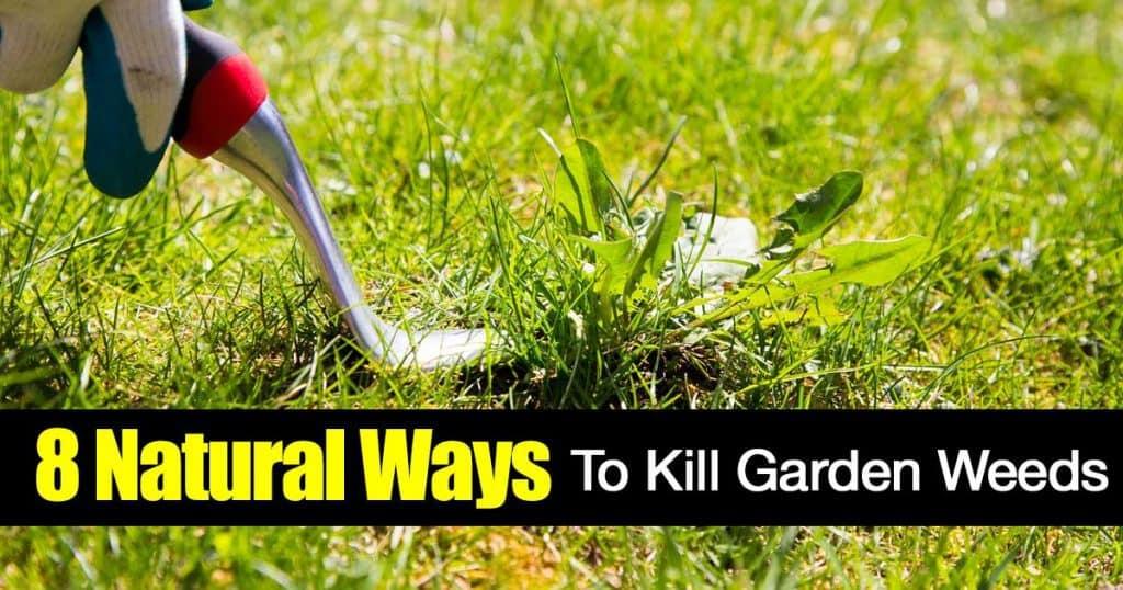 digging garden weeds
