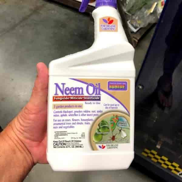 Bottle of Neem Oil Spray