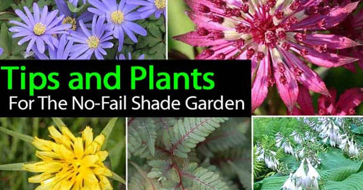 Tips And Plants For The No Fail Shade Garden