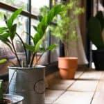 Growing Houseplants In The North Window