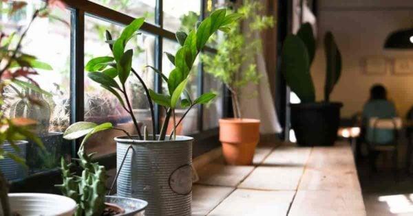 Plantas en una ventana norte