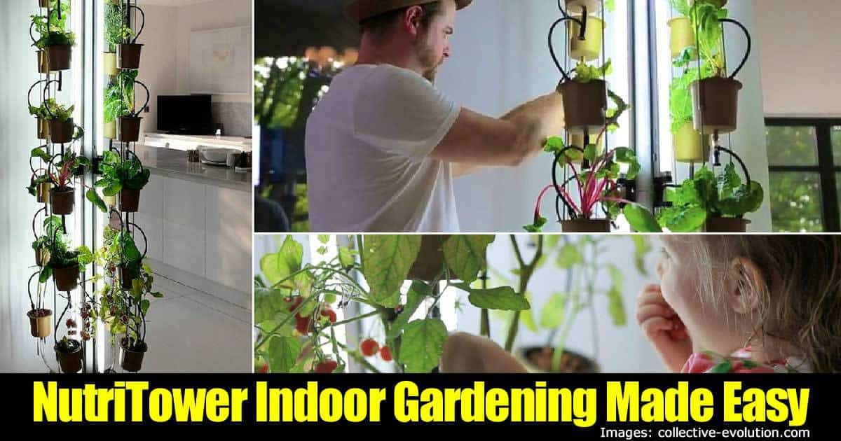 Indoor gardening made easy with nutritower for Indoor gardening made easy